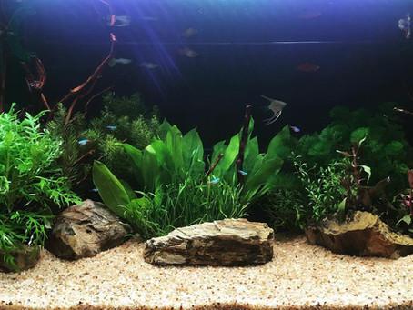 熱帯魚・水草 水槽レイアウト・イメージ