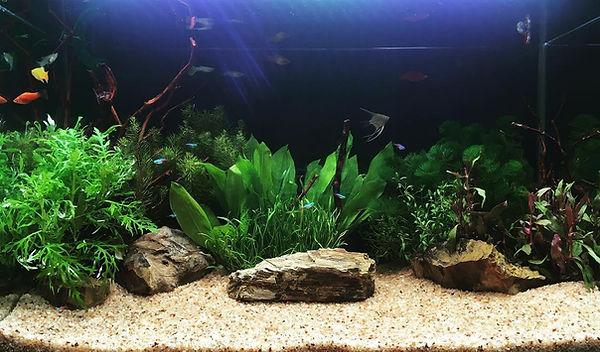 池や川に生息する熱帯魚の水槽です。 水草・石・流木等で水景をコーディネートいたします