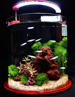 小型水槽・水草・熱帯魚