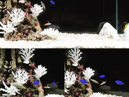 海水魚 水槽レイアウト・イメージ