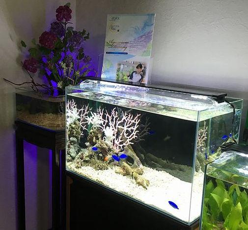 暖かい海に生息する熱帯魚(海水魚)の水槽です。 ライブロック・石・飾りサンゴ等で水景をコーディネートいたします