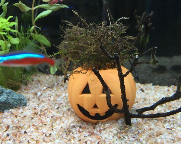 ハロウィン 熱帯魚水槽レンタル