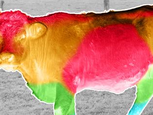 Bovin viande: préserver le potentiel de production en été