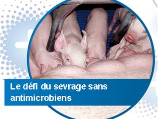 Points importants dans une stratégie de réduction de l'utilisation d'antimicrobiens