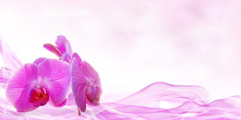 Purple orchid-smoke.jpg