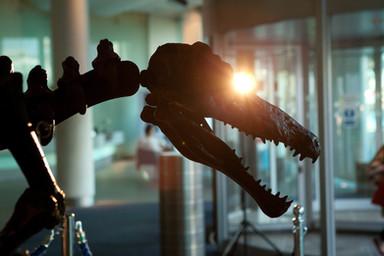 BBC Dinosaur