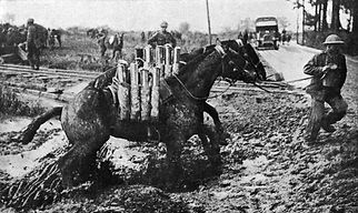 Horse Carrying Artillery Shells–Western Front Witness– Weaponry in WW1-WW1 Tactics-WW1 artillery-WW1 Snipers