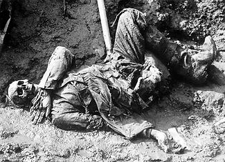 Mutilated Corpse–Western Front Witness–Animals in WW1-Horses in WW1-Dogs in WW1