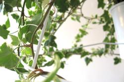 Photosynthesis lamp
