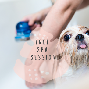 Fancy a FREE pampering spa session for your pet?