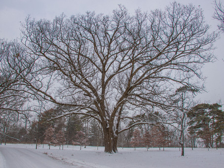 Winter Structure, Winter Snow....