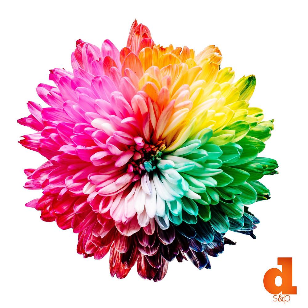 DS&P Color Flower