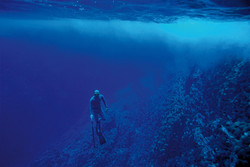 Dive - Easter Island