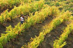 Aconcagua Wine Valley