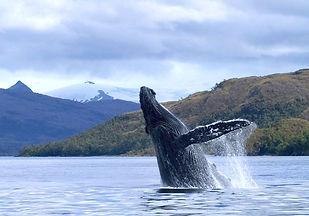 big-chiloe-ballenas.jpg