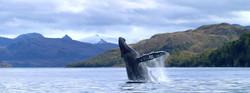 big-chiloe-ballenas