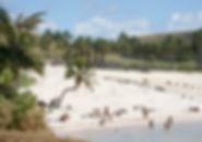 Anakena playa.jpg