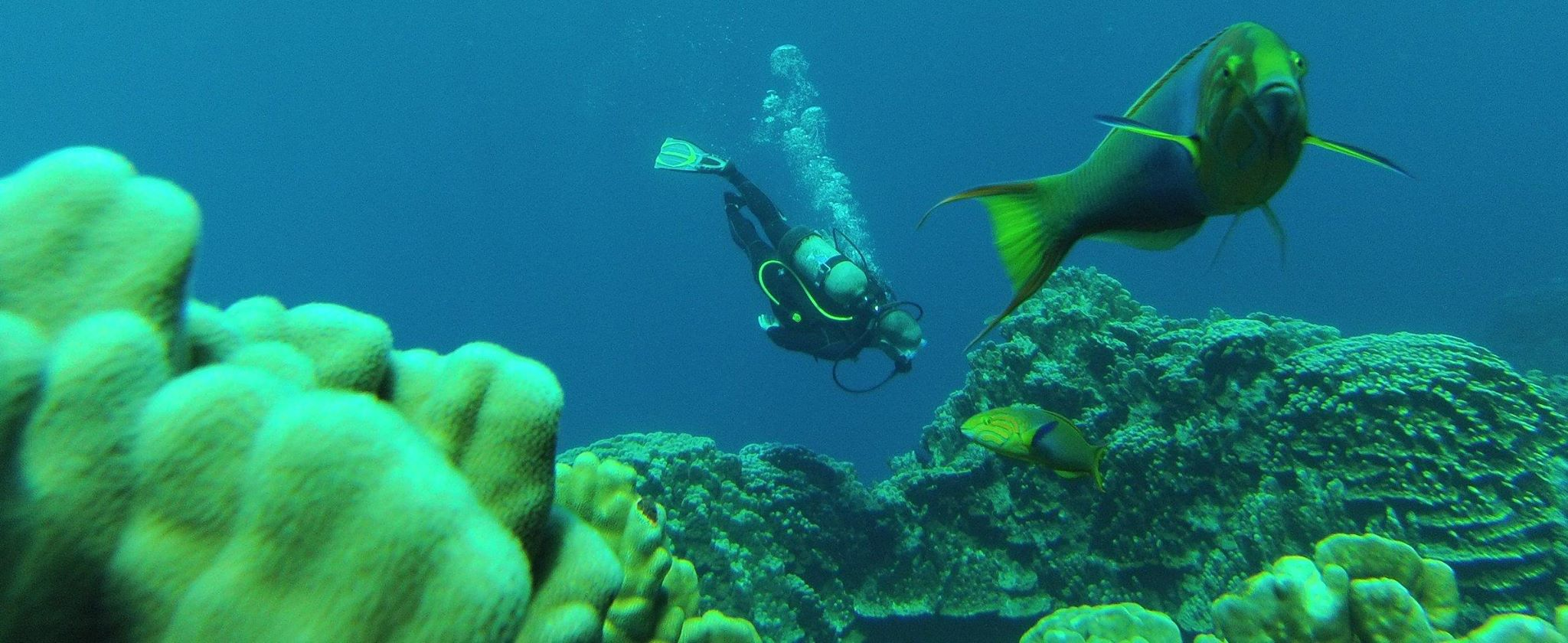 Diving in Easter Island