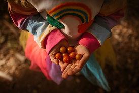 tomates do arco iris-1.jpg