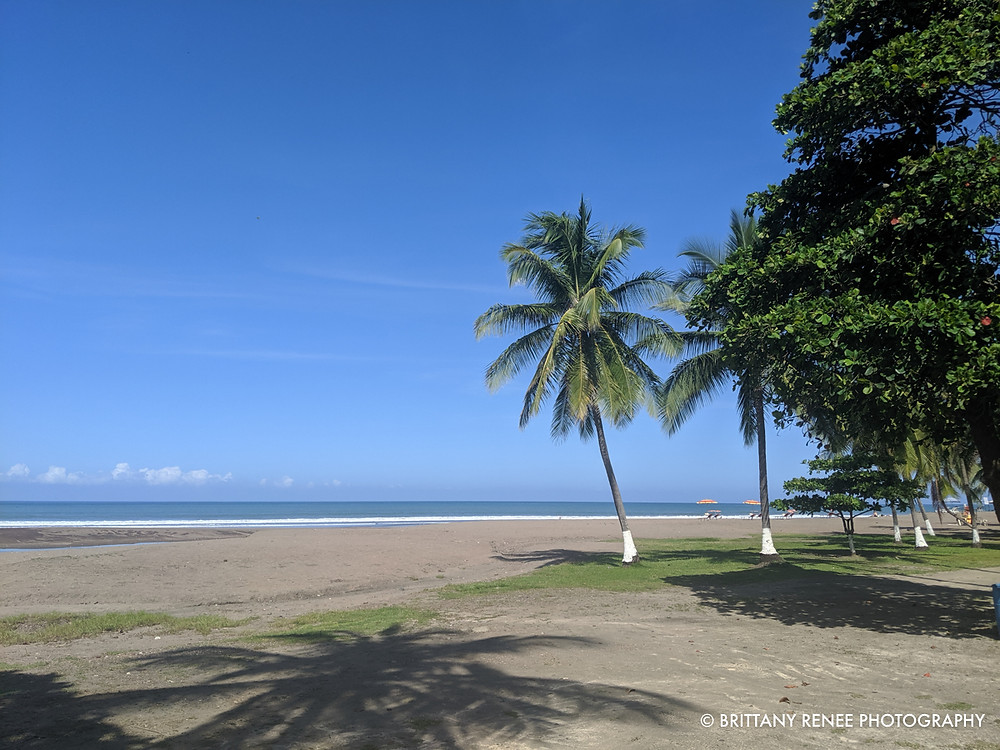 Palm Trees on Jaco Beach in Costa Rica