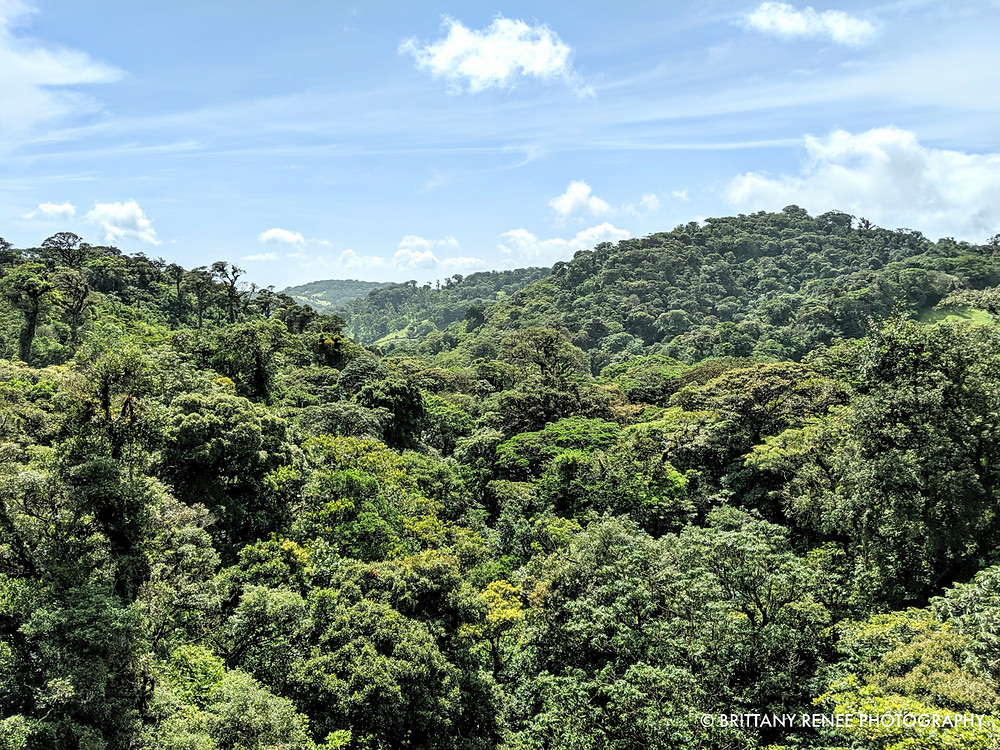 Monteverde Cloud Forest in Costa Rica