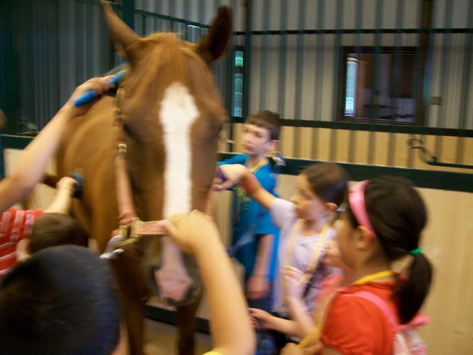 Horse Farm Trip