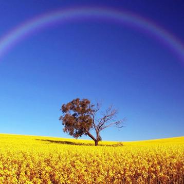 Entre el blanco y el negro, no está la escala de grises, está el arcoiris.