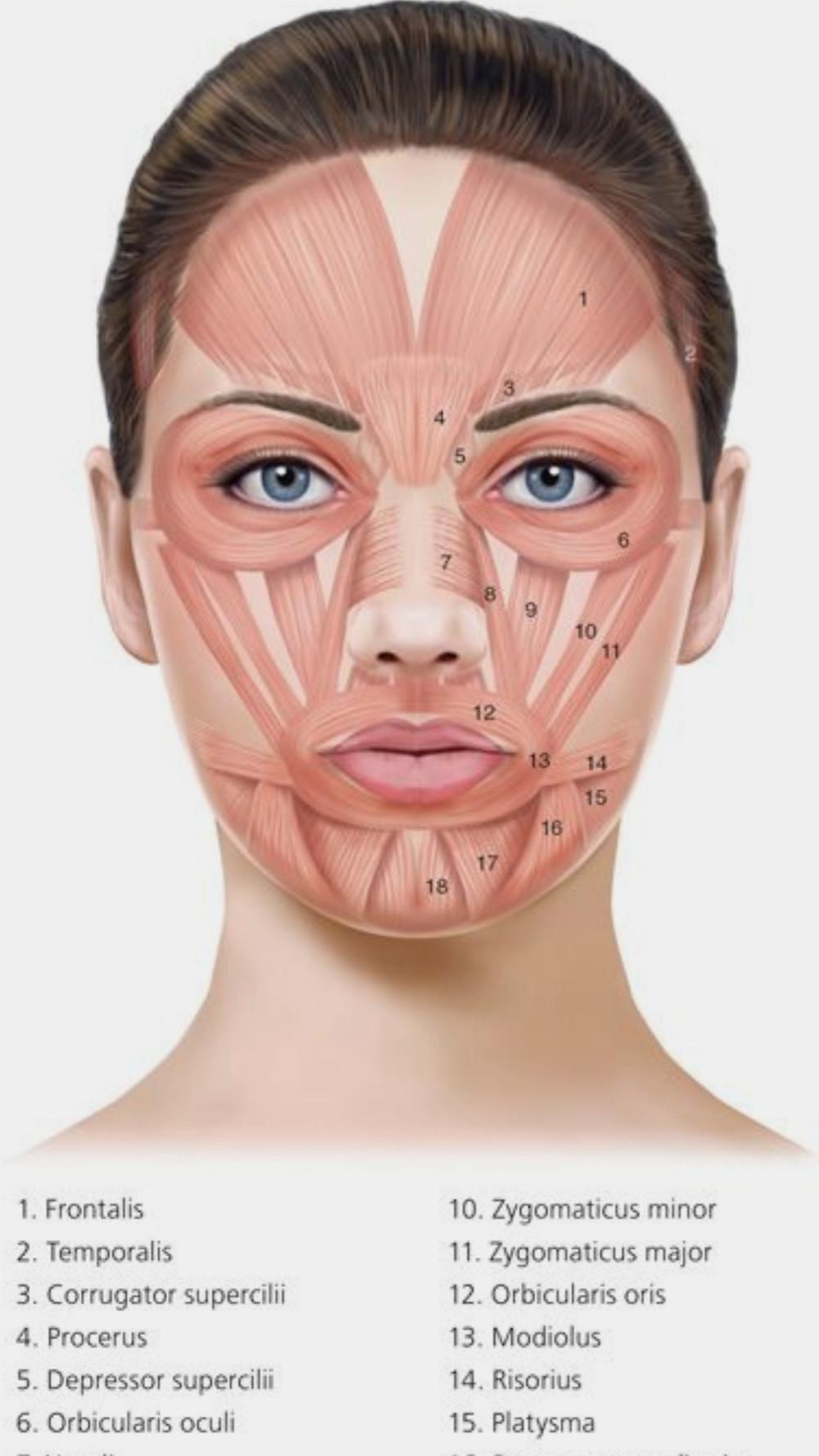 En el rostro hay muchos músculos que es interesante ejercitar y relajar
