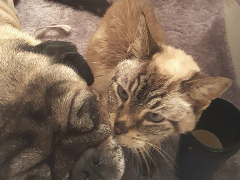 Who says Dogs and Cats Can't get Along?!