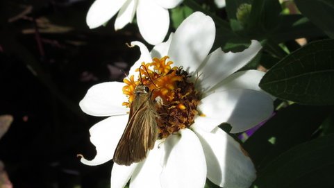 Pollinator Pageant: Who's Getting Left off the Stage?