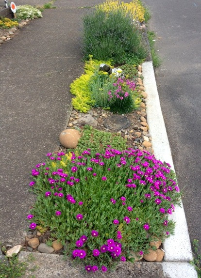 A small strip of space between the road and the sidewalk, it has pink and yellow flowers and native grasses growing in it