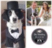 wedding pooch.jpg
