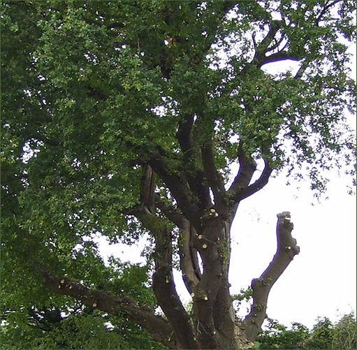 Branch-n-limb.jpg