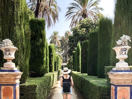 Iconic hedges under threat