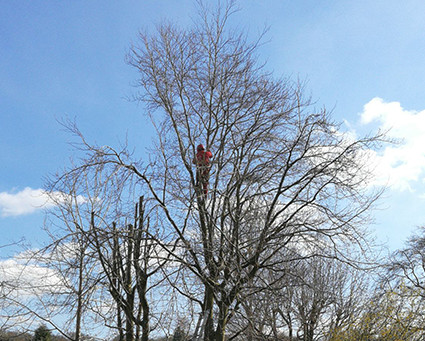 Tree Surgeons Taking A Bad Rap In Some Areas