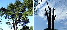 precision-tree-felling-befo.jpg