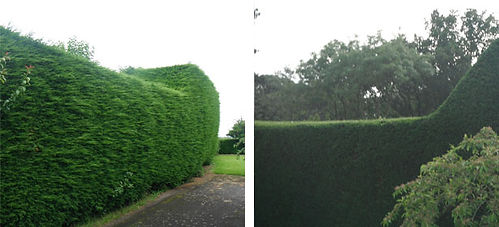 hedge-trimming.jpg