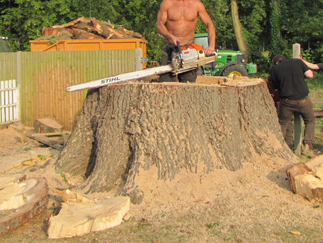 Safety procedure for Tree Surgeon