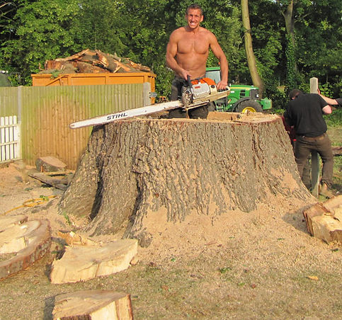stump-removal.jpg