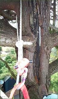 arboriculturtal-consultancy2.jpg