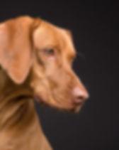 dog-3277417_1280.jpg