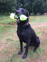 Litter Picking Dog