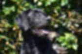 black-3003839_1280_edited.jpg