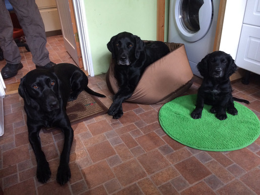 Three Good Dogs