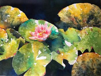 Autumn's Last Lily