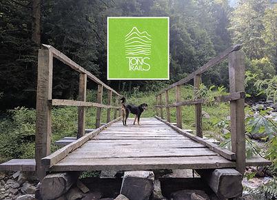 TT-image-01-dog-on-bridge-wallpaper.jpg