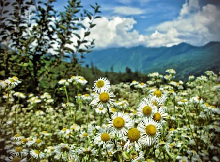 Summer blooms light up Kalap!