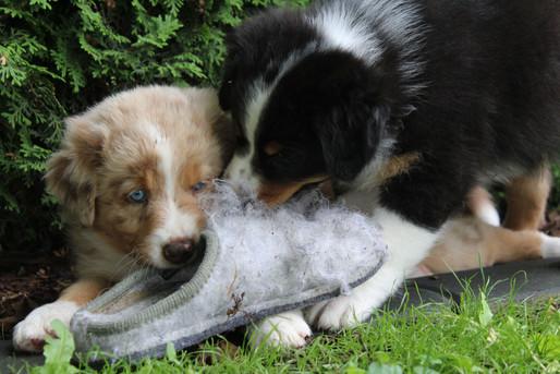 Malia und Merlin.jpeg