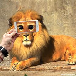 Lion shrek