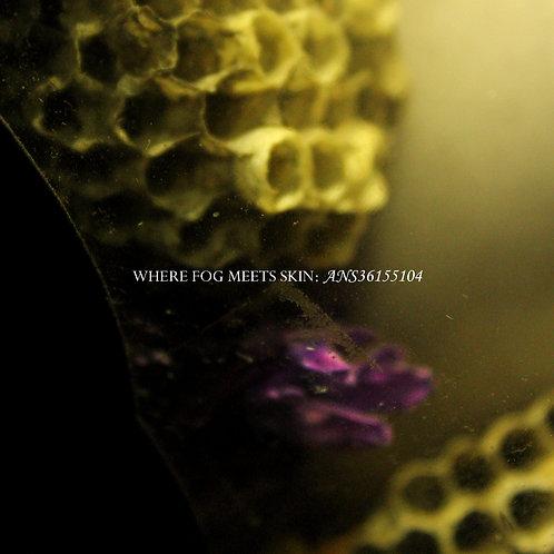 Where Fog Meets Skin - ANS36155104 (Digital Album)